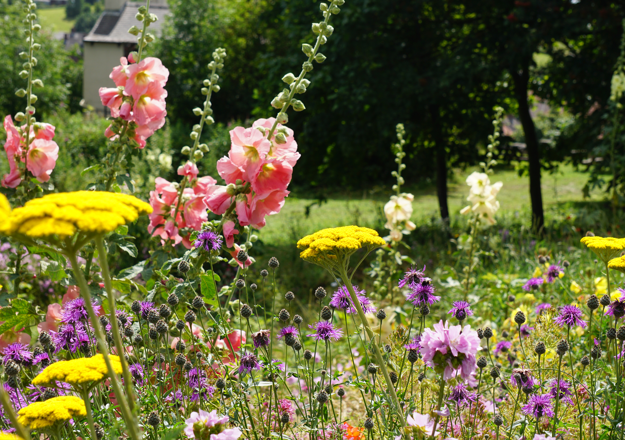 Meadows surrounding Sheffield Manor Lodge venue hire, The Discovery Centre