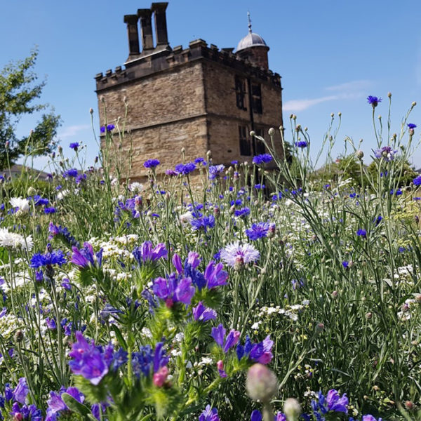 Turret House amongst Pictorial Meadows